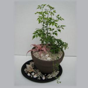 070710室内で楽しむ観葉植物の寄せ植え