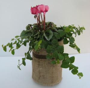 0810102冬に向かって窓辺で楽しむ寄せ植え(ペットボトルを使って)