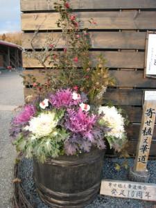 090116花フェスタ記念公園大きな寄せ植え