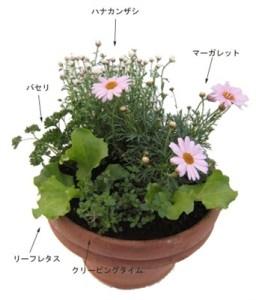 寄せ植え「ポタジェ花と野菜を一緒に楽しむ」