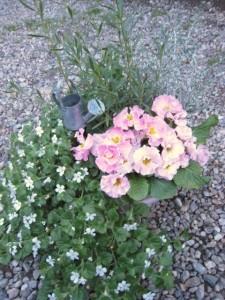 春の寄せ植えに模様替え