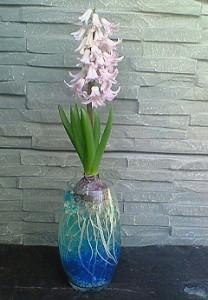 ヒヤシンス咲いたよ。