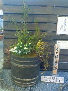 080406花フェスタ記念公園の巨大寄せ植え