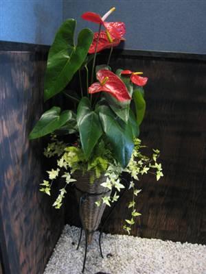 一宮市の高級焼き肉店「川嶋屋」様 店内の観葉植物の寄せ植え