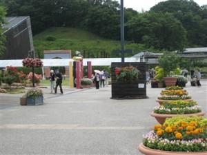 花フェスタ記念公園 西ゲート付近に巨大なハンギングバスケットは掛っています