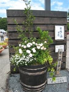 バラの巨大な寄せ植え