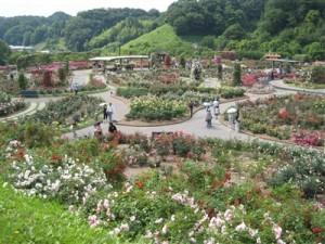 花フェスタ記念公園 世界のバラ園