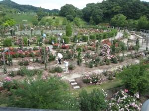 花フェスタ記念公園 バラのテーマガーデン