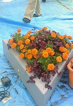 水上花壇 マリーゴールド