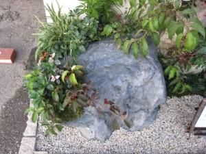岩に秋の寄せ植え