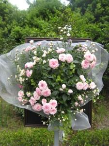 薔薇の花束のハンギングバスケット
