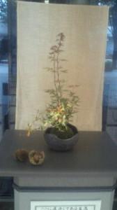 苔玉 秋の彩り