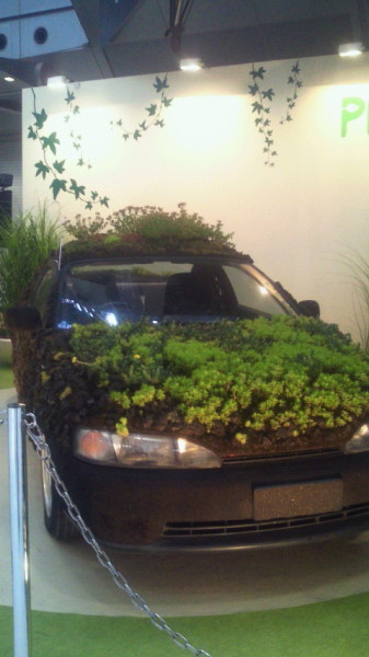 車に多肉植物?