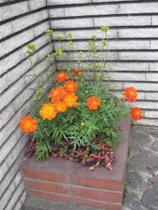 華やかな寄せ植え
