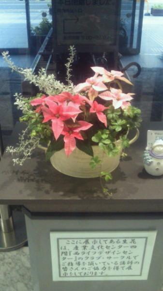 【クリスマスの寄せ植え】各務原市産業文化センターロビーの寄せ植え