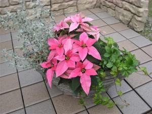 プリティー♡クリスマスの寄せ植え花創人はなそうにん