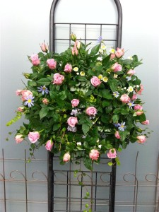 薔薇のゴージャスなハンギングバスケット