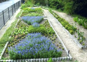 H24各務原市水と緑コンクール市長賞つつじが丘上池クラブ花壇ブルーサルビア