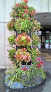 国体ホッケー競技リハーサル大会立体花飾り(110914)ベゴニアのハンギングタワー