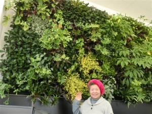 伊藤商事 壁面緑化