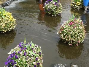 オアシスパーク水上花壇パンジーにカビ生えた