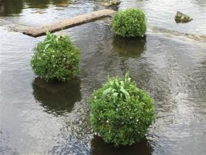 オアシスパーク水上花壇お手入れをしてスッキリ