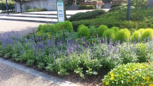 2014オアシスパーク様夏花壇