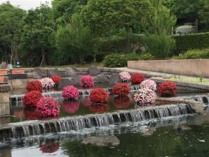 まん丸きれいなインパチェンスの水上花壇