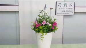 日日草の寄せ植え教室