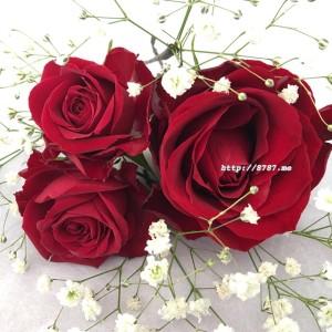 【卒業式の髪飾り】真紅の薔薇