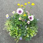 和風の鉢に春のギャザリング寄せ植え